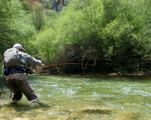 Stag Fishing